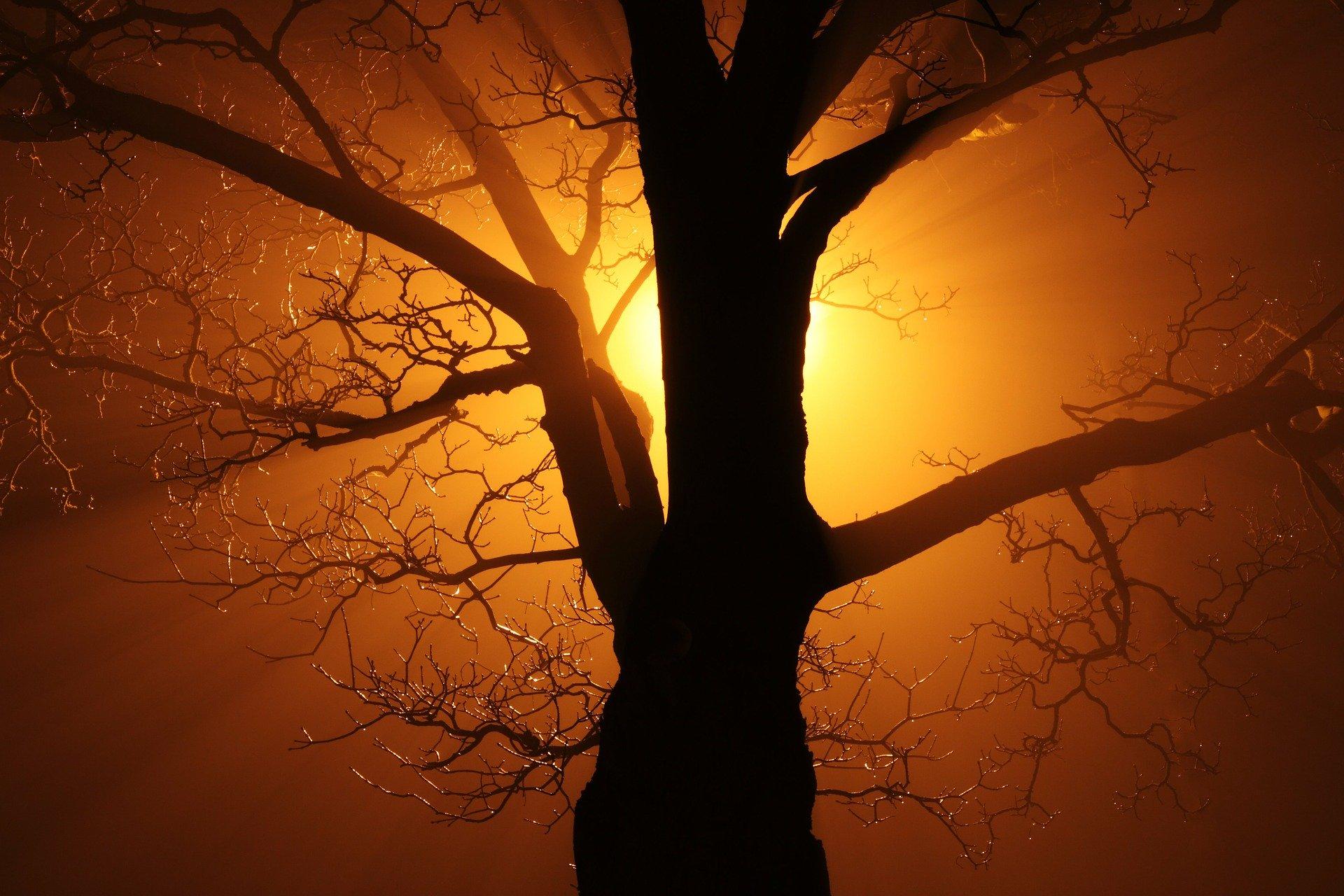 Yggdrasill – Der Weltenbaum IX